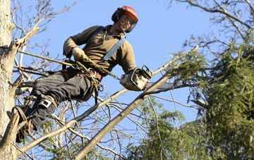hiring experienced Staines tree surgeons