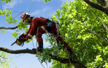 find trusted rated Staines tree surgeons in Surrey