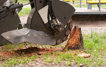 professional Staines stump grinding services