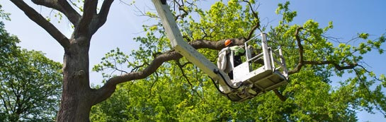 Staines tree surgery services