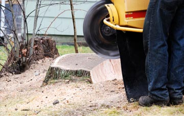 rated Staines tree stump removal companies