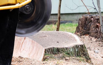 tree stump grinding Staines, Surrey