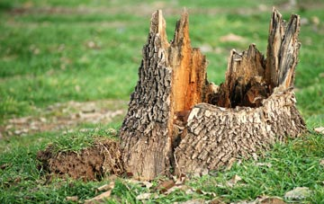 tree stump removal Staines, Surrey