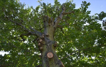 what is Staines tree surgery?