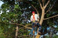 Staines tree crown reduction services