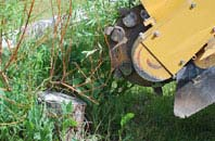 free Staines tree stump grinding quotes