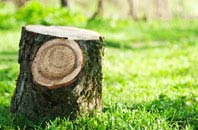 Staines tree stump removal services