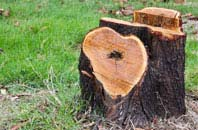 free Staines tree stump removal quotes