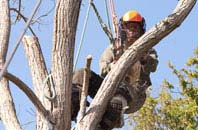 Staines tree surgeon services