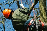 free Staines tree surgeon quotes